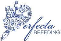 LOGO-Kalanchoe-Perfecta-Breeding