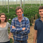 FIRST CUT FLOWER HYDRANGEA GROWER IN BRAZIL CHOOSES HBA RANGE