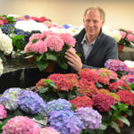 SHELF LIFE TEST FIXED PART HBA HYDRANGEAS