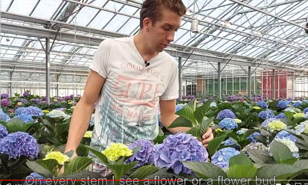nieuwe video Royal Palace Royal Wedding HBA-Agriom