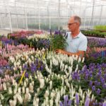 VERONICA POPULAR WITH GROWERS AND CONSUMERS